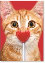 Kitten W/ Stuck Lollipop