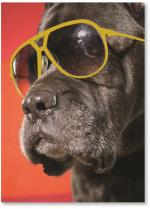 Black Dog In Sunglasses