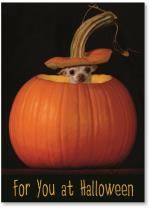 Chihuahua Peeking out of Pumpkin