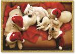 Santa puppies sleeping