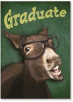 Donkey with glasses