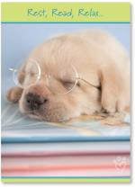 Puppy In Glasses