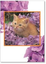 Orange Kitten In Flowers