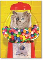 Cat stuck in gumball machine