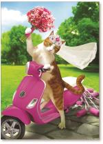 Cat bride scooter ride