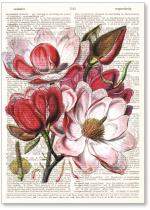 Magnolia flowers on newsprint background