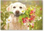 Dog with flowers.