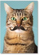 Cat with a mustache
