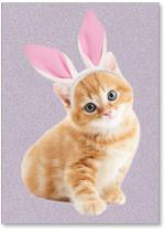 Kitten with bunny ears.