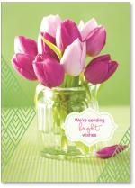 photo purple tulips with green background