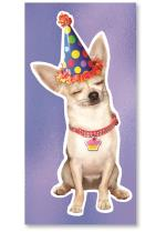 Dog with birthday hat.