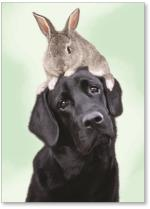 Dog with rabbit on head.