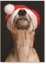 Dog with a Santa hat over it's eyes.
