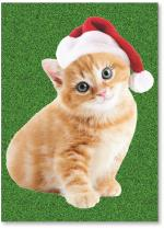 Kitten with Santa hat.