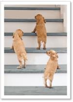 dogs climbing stairs