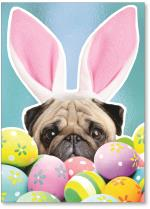 Pug with rabbit ears.