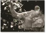 Elephant with bubbles